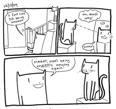 Cat Reconnaissance…